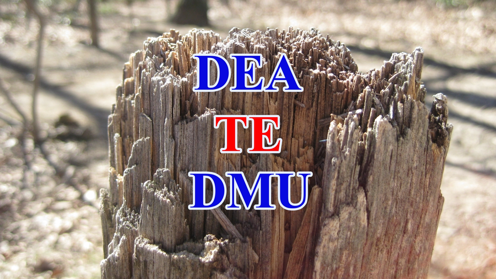 dea te dmu - Phân tích bao dữ liệu DEA Hiệu quả kỹ thuật